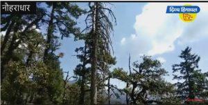 बारिश में मददगार खरशू के पेड़ों को लगी बीमारी, खतरे में पर्यावरण।