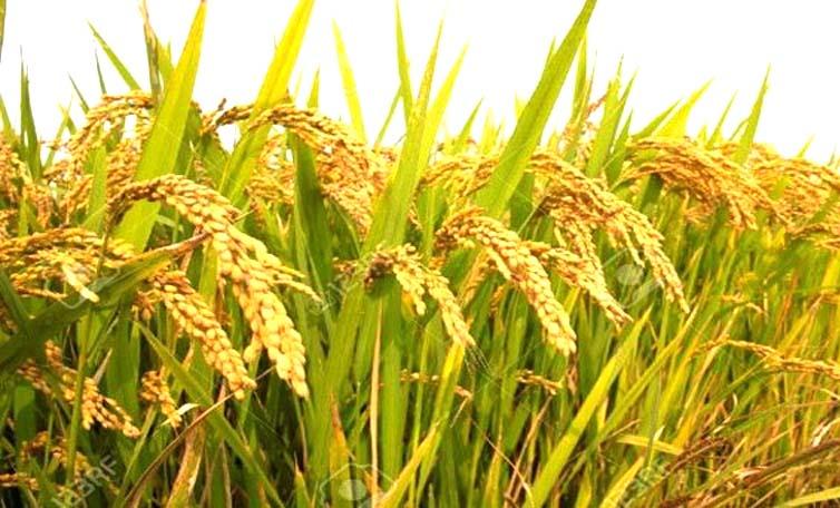 कृषि निर्यात बढ़ने की उम्मीद: डा. जयंतीलाल भंडारी, विख्यात अर्थशास्त्री