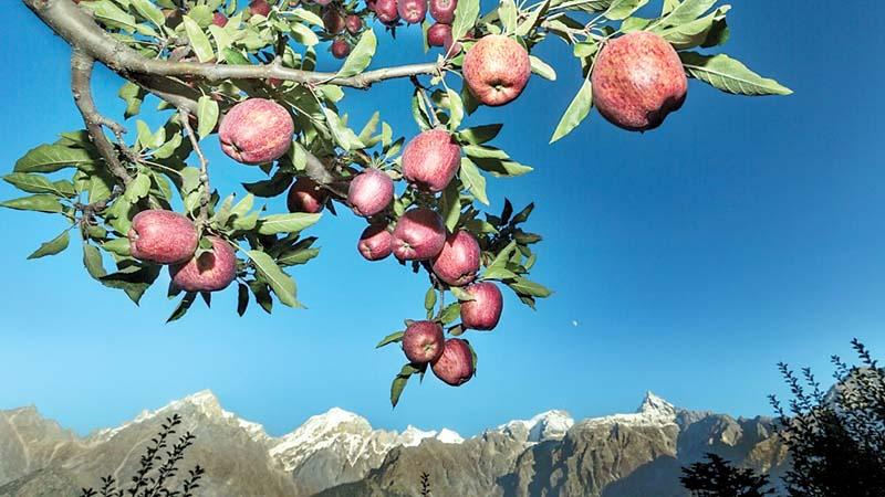 हिमाचली सेब के लिए खतरे की घंटी