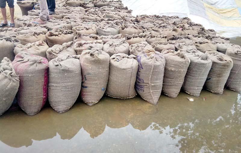 पिहोवा मंडी में पानी में डूबी धान की बोरियां, खुले आसमान के नीचे रखी हैं पांच लाख बोरियां